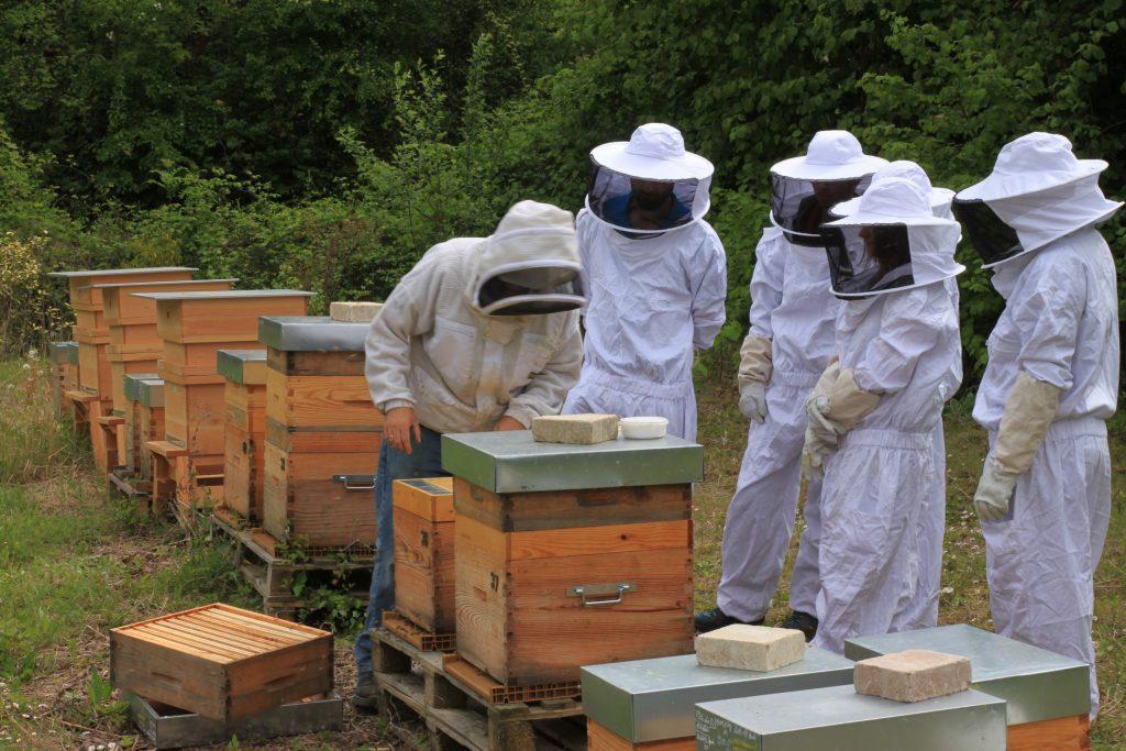 apiculteur local abeilles ruchers entreprises Ile-de-france
