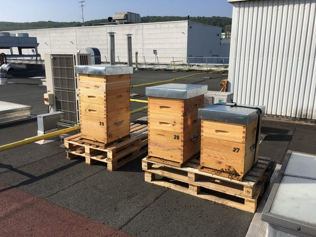 location de ruches sur toits ou jardins des entreprises