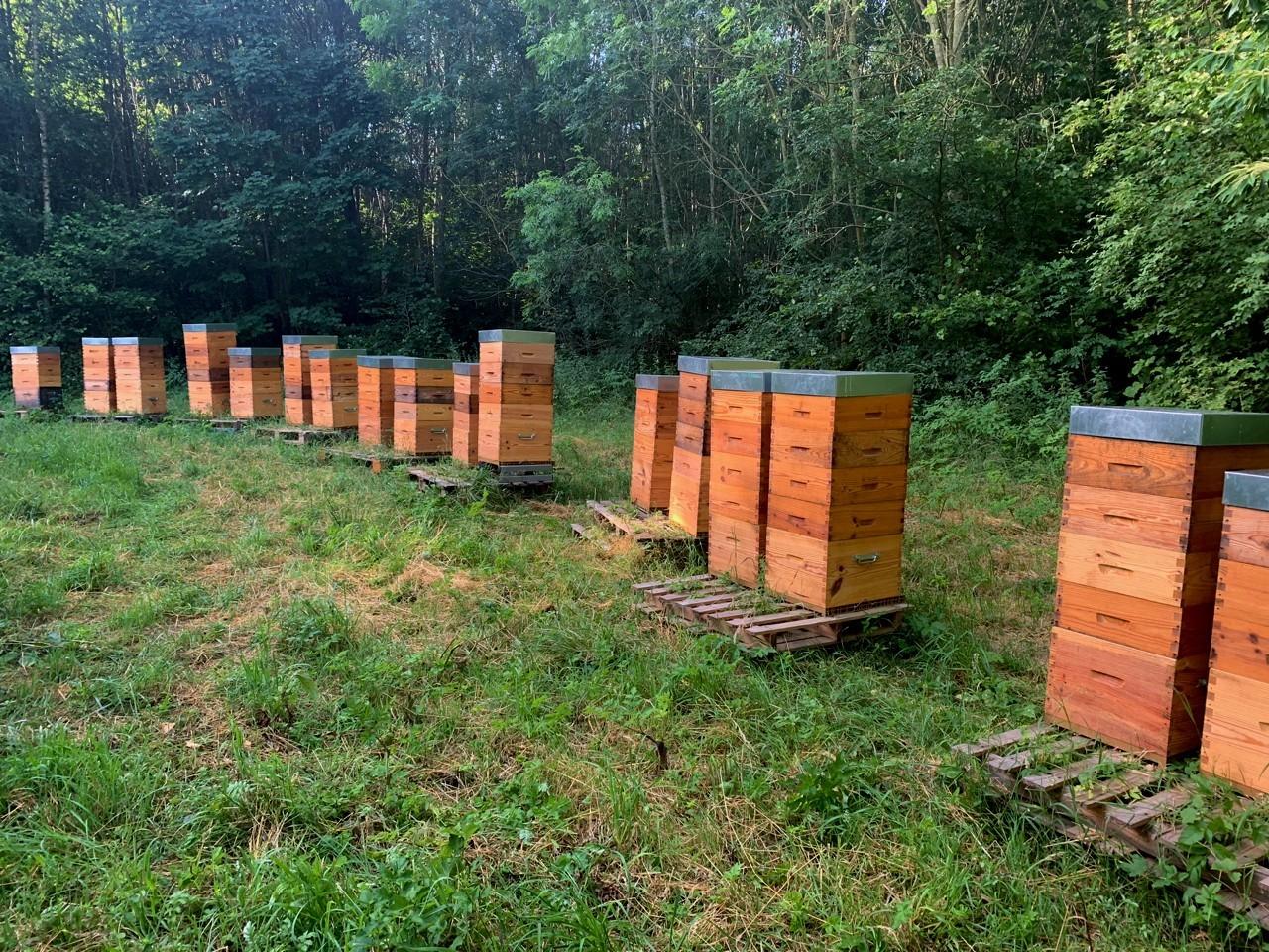 Ruches d'abeilles entreprises ouest parisien, nature