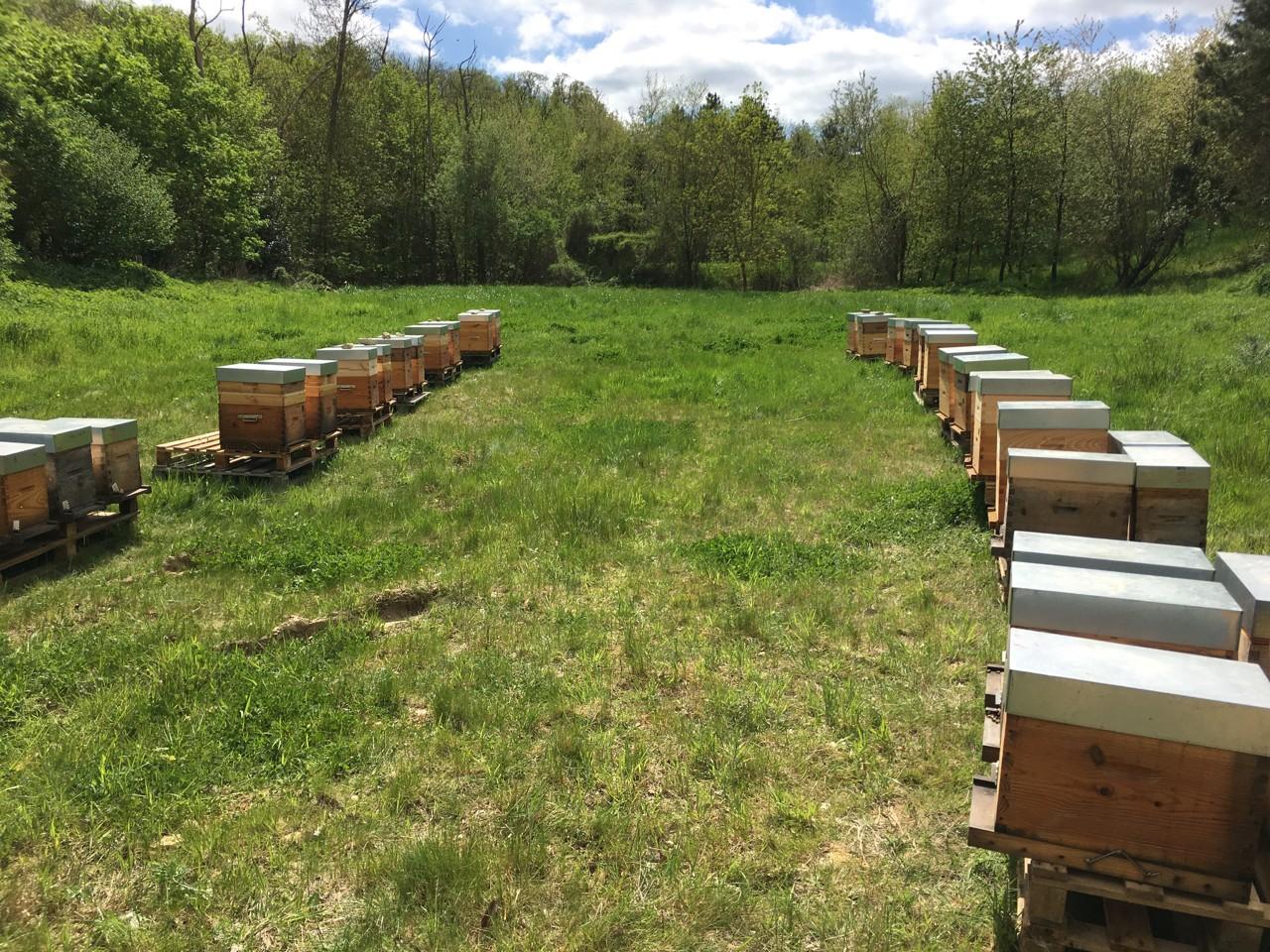 Ruches d'abeilles entreprises ouest parisien