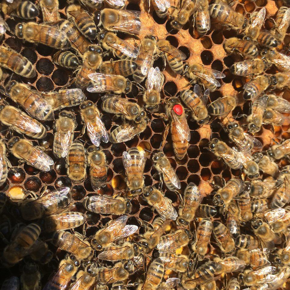 Ruches d'abeilles Yvelines, Hauts-de-Seine, Val-d'Oise, et Eure