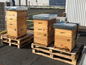 location de ruches sur site entreprise