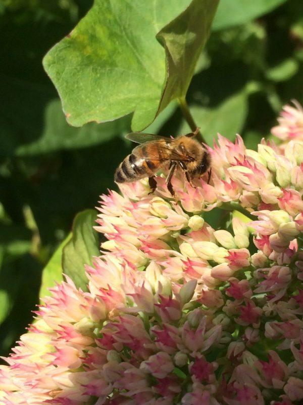 apiculteur local abeilles ruchers entreprises