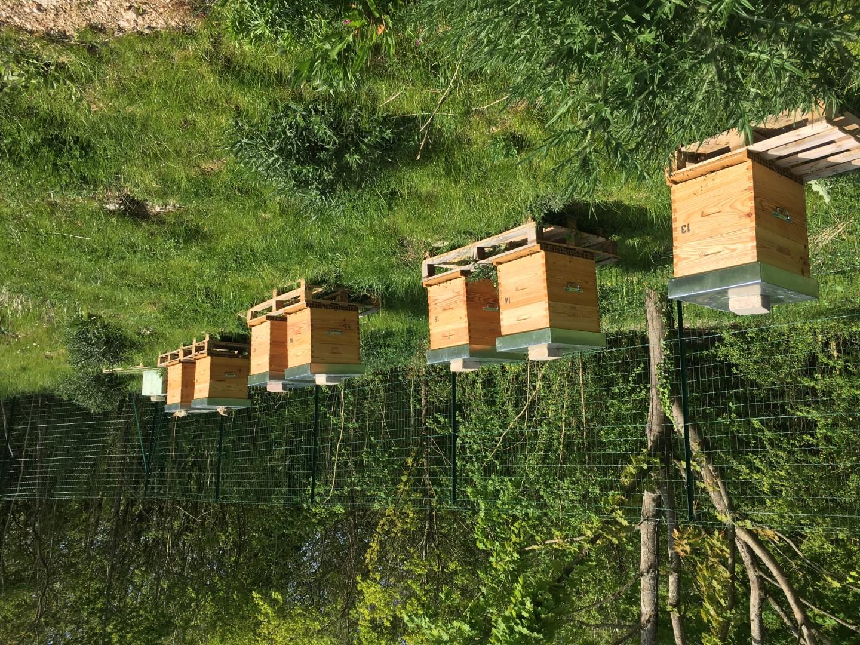 Ruches d'abeilles entreprises Ile de France