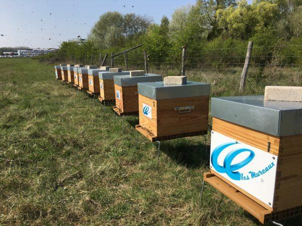 Apiculteur local abeilles, location ruchers entreprises